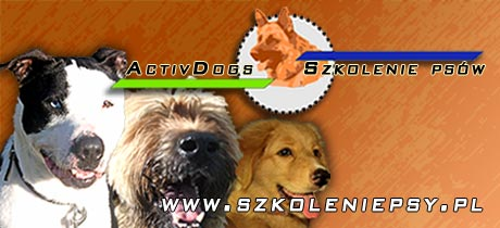 Activ Dogs